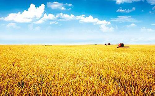 农业公司_农产品网站建设解决方案